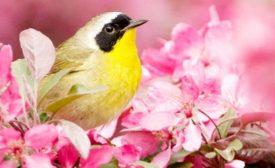 bird safe buildings