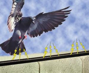 Bird-B-Gone electric track bird deterrent system