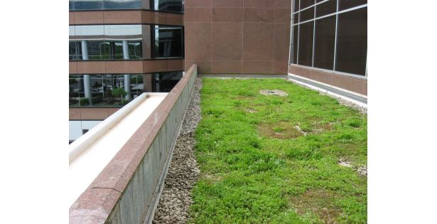 Xero Flor Green Roof at MetroTop Plaza